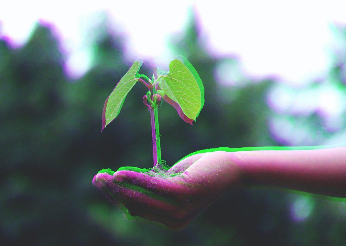 Baum in einer Hand